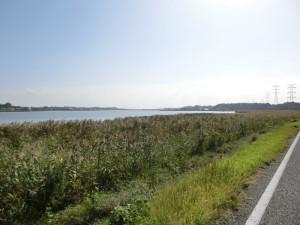 手賀沼自転車道 沼