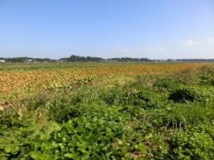 手賀沼サイクリングロード 緑地