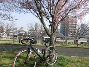 荒川サイクリングロード 春 桜