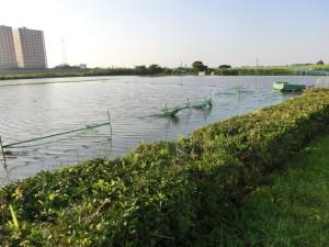 江戸川サイクリングロード 大雨