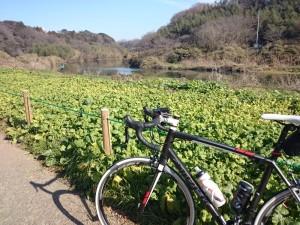 花見川サイクリングロード 自転車