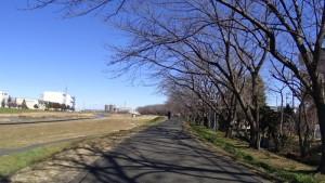 柳瀬川 サイクリングロード
