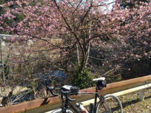 房総 春 花 自転車
