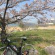 つくし湖 桜