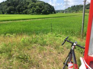 千葉 田んぼ 風景 自転車