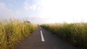 江戸川サイクリングロード 雑草