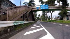 松並木 国道1号 ロードバイク