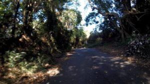 鎌ヶ谷市 自転車 裏道