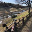 利根運河サイクリングロード 2020年