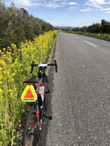 房総フラワーライン 菜の花 ロードバイク