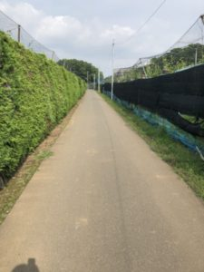 ロードバイク 交通量の少ない道