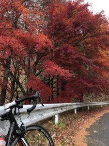 榛名山 紅葉 ロードバイク